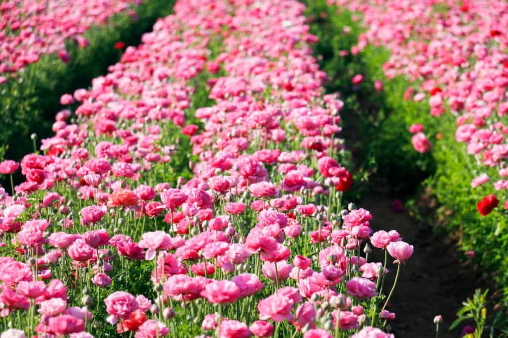 spring super bloom